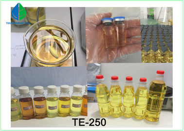 China High Purity Testosterone Enathate Muscle Building Steroids Yellow Liquid for Cutting supplier