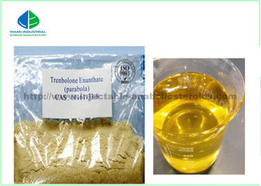 China Finished Liquid Delatestryl Injectable Anabolic Steroids TE600 Enathate 600mg / Ml For Muscle Building factory